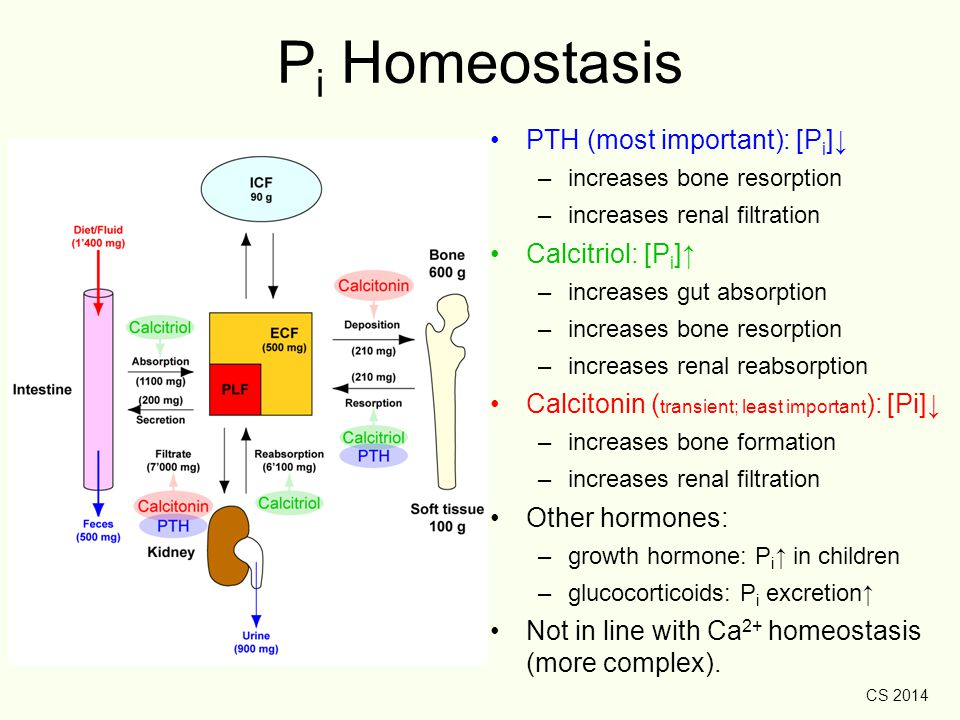 Pi Homeostasis PTH (most important): [Pi]↓ Calcitriol: [Pi]↑